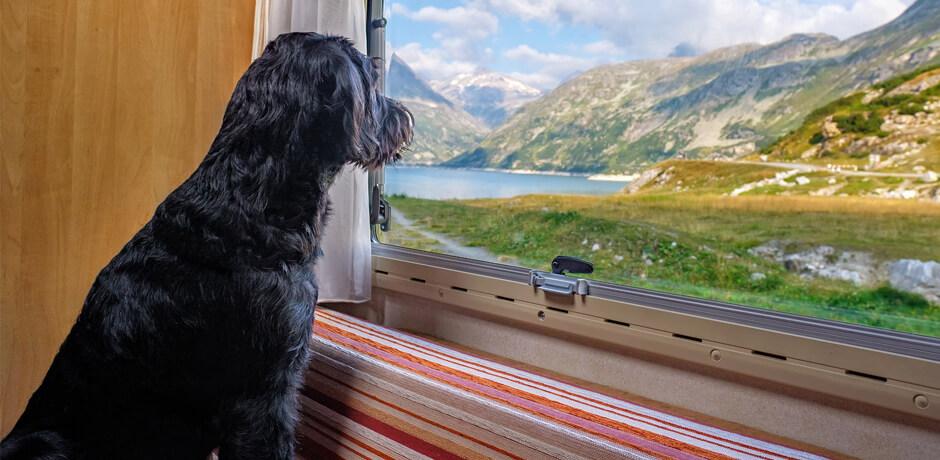 Haustier-Überwachung im Wohnmobil